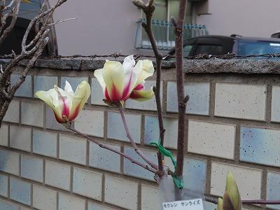 通勤路で見つける春の色