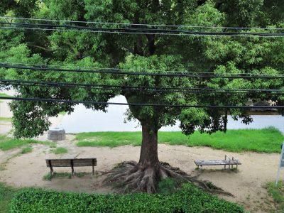 クスノキの木陰のベンチで、今日の一枚